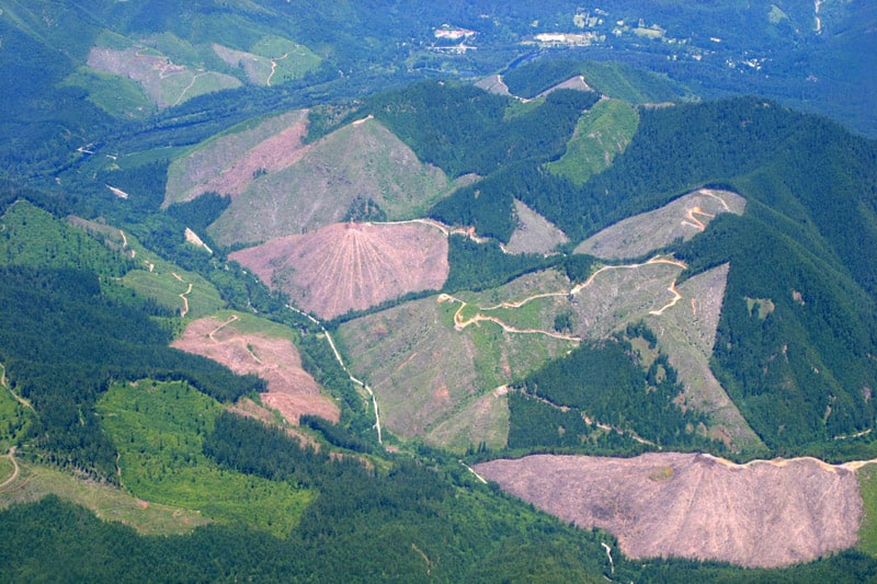 Clearcut Oregon The Smokey Wire National Forest News