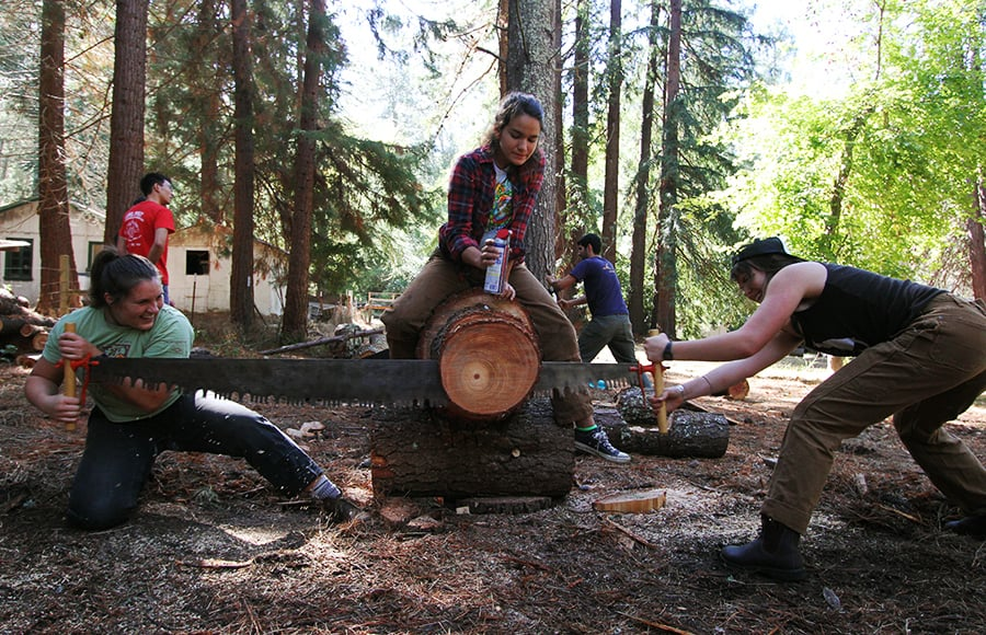 "Madeline Green and Allison Erny practice ""buck-sawing"" with Cal Logging Sports at the Russell Research Station. Courtesy of Anya Schultz."