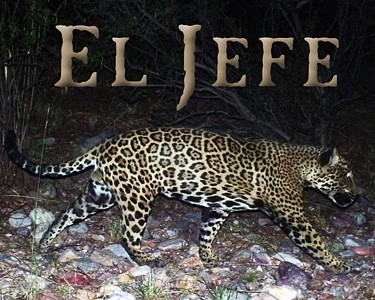 new lawsuit on arizona copper mine and jaguars – the smokey wire