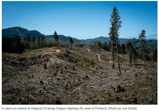 Report: Timber harvesting is by far the largest source of greenhouse
