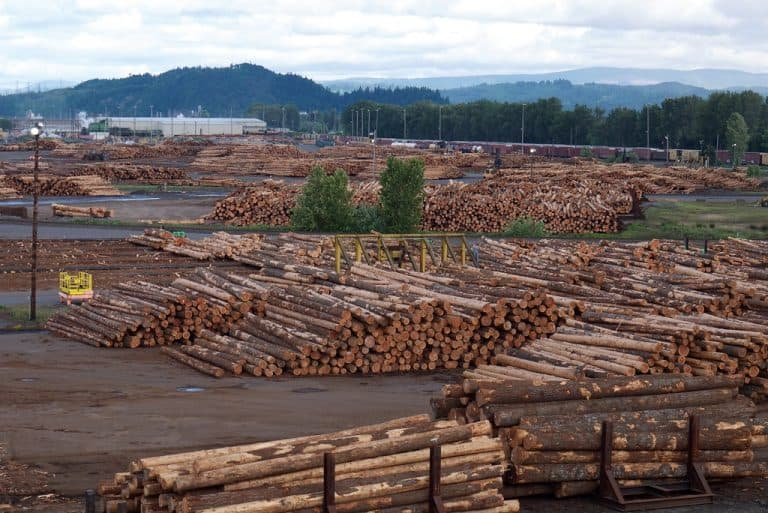 Oregon Climate Bill Leaves Out Big Timber – State's Largest Polluter