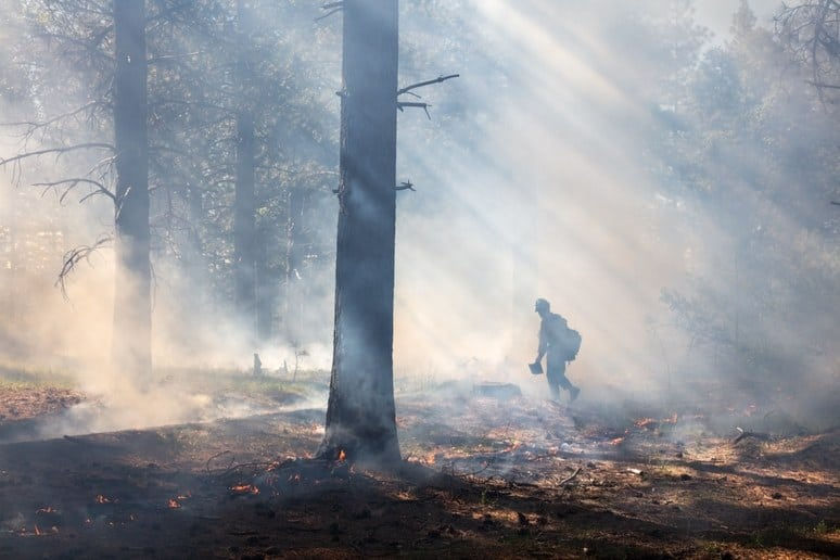 The Smokey Wire : National Forest News and Views – Community