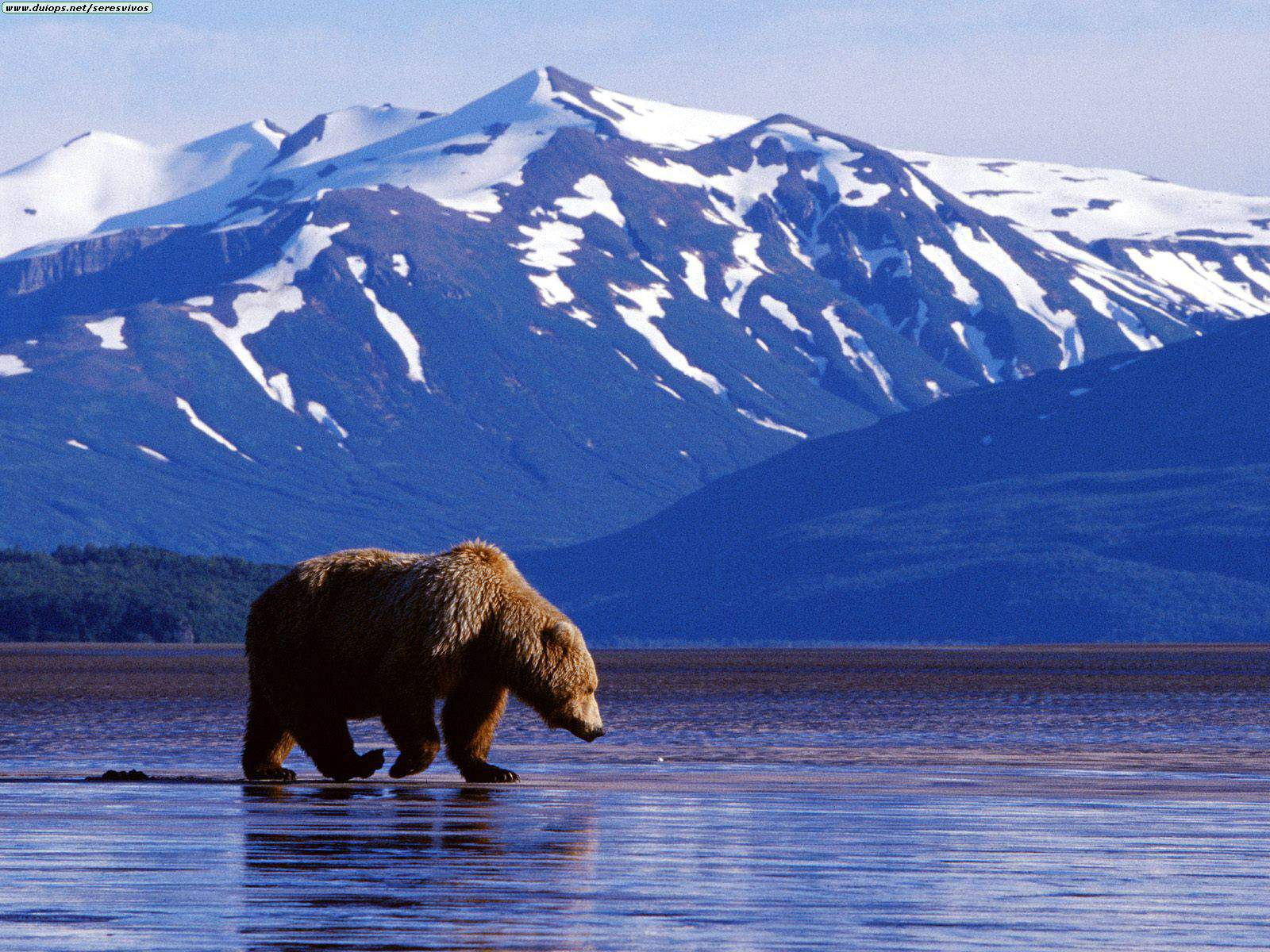 David Beebe was the noted Alaskan on this blog.